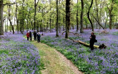 Virtual Garden Visit: Kinclaven Bluebell Wood