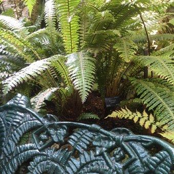 Benmore Botanic Garden Victorian Fernery. Photograph © Matthew Benians