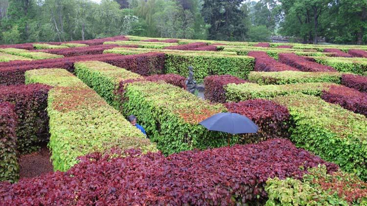 Scone Palace maze